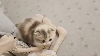 cute kitten videos fun