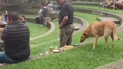 Dog steals a nice meal