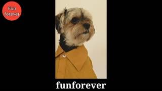 Cute Dog Wearing Shirt