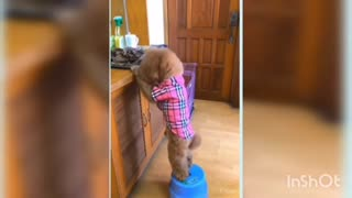 Cute puppy helping other puppy