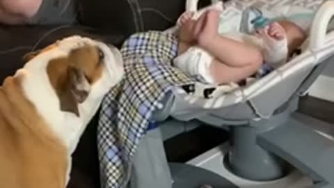 Baby Finds His Legs and Breaks Glider