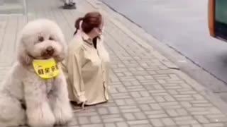 Girls loved dog