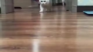 Where did the cat go