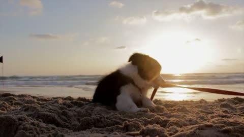 Good dog and beautiful sea view