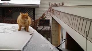 epic fail cat jump
