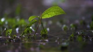 Meditational Music    Bansuri   Bamboo Flute   Rain Sound   