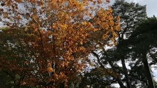 Autumn Trees Sunny Day
