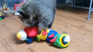 Raccoon is amazed at the toys he's never seen before.