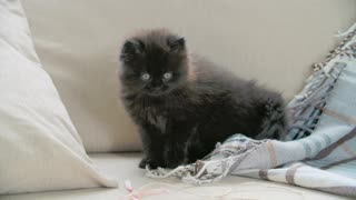 Baby cat playing on the couch