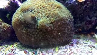 Small underwater world