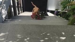 Thoughtful puppy brings beautiful flowers for his owner
