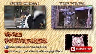 World's FUNNIEST ANIMAL VIDEOS