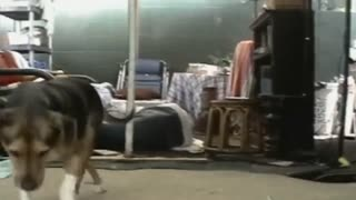 Can't stop laughing!😂😂 Funny dog compilation