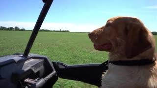 Duck Hunting Dog Training!