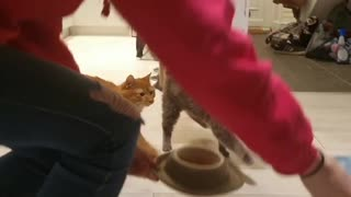 Cats Marching in Time for Meal