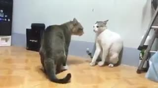 See what cats do