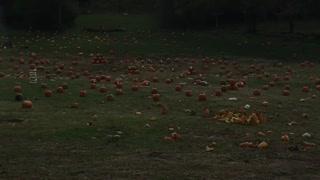 Smashing Pumpkins shootout
