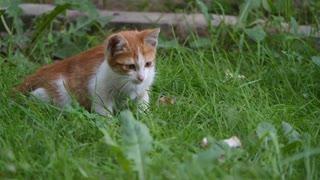 small cat chasing something