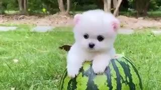 curious video watch it cute
