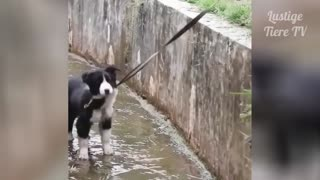 Omg super cute best funny cat and dog compilations