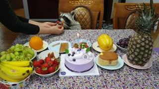 Raccoon's birthday party