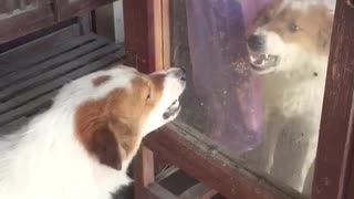 Doggy Meets its Match in the Mirror