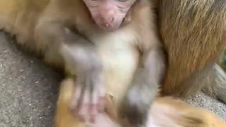Cute little monkey is very smart