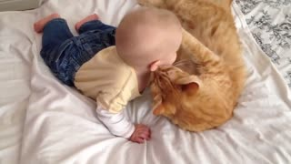 Cat Meeting Babies for the FIRST Time Compilation