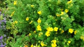 Burnbrea garden is lovely
