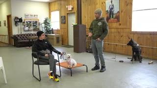 Training a nervous dog