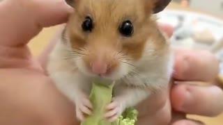 wildanimalsdoingthings - enjoy funny animal doing incredible things