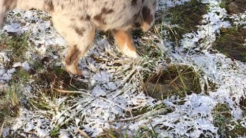 Cute little puppy discovers frozen ground for the very first time