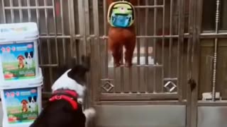 Funny dog came back home from school.