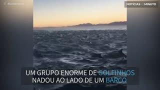 Grupo enorme de golfinhos acompanha barco durante o pôr do sol
