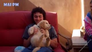 Best of cute golden retriever puppies compilations