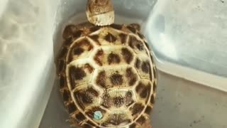 Turtle Sitting in The Water Basin in The Bathroom
