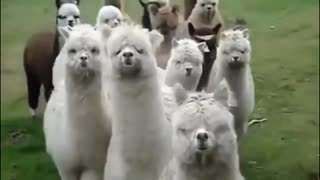 best cute funny animals