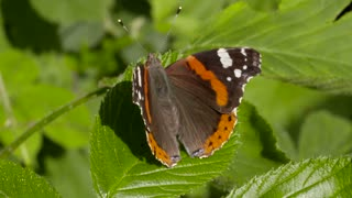 How To Catch Baby Butterfly on Green Leaf