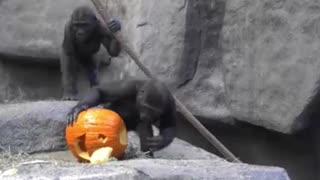 Animals celebrate Halloween