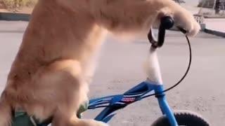 Dog unique skills