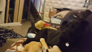 Cody and maggie cuddling