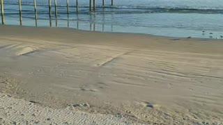 Florida beach covid-19