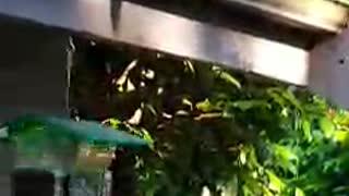 Raccoon Yoga Pose