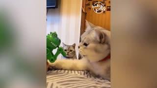 Funniest cat reactions