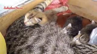very sweet cat baby's sleep on mother's body