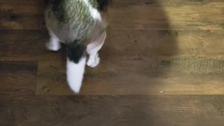 Cute Reaction Of Hungry Dog Searching Food