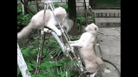 Funny Cats Clips funny cats