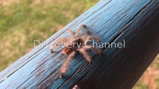 Spider crawling
