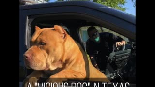 Officer Befriends 'Vicious' Pit Bull