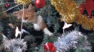 A cat as Christmas tree decoration
